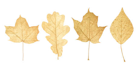 golden leaves isolated on white