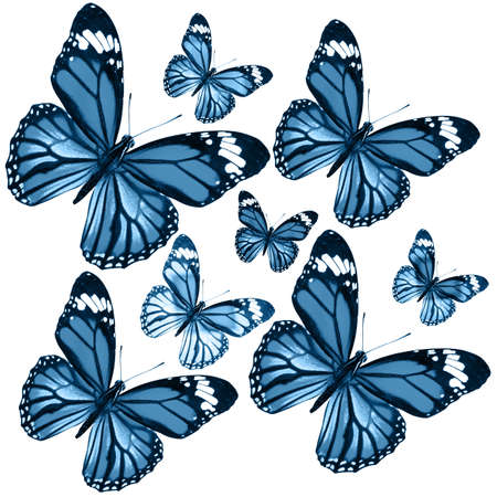 Blue butterflies isolated on white background. tropical moths. insects for design. Imagens