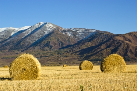 Hay bales in the field with mountains on a background photo