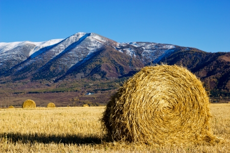 Hay in the field with high mountain on a background photo