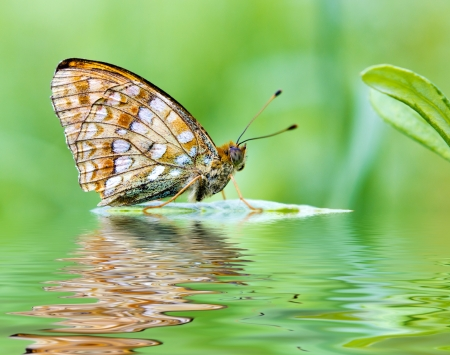 The beautiful butterfly on the plant over the water with reflections photo