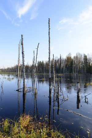 Scenic autumn landscape swamps in northern Russia photo