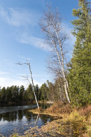 scenic autumn landscape of river and trees in northern Russia photo