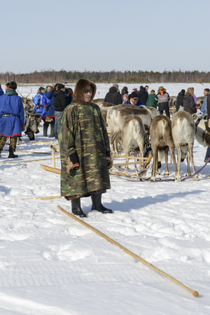 national holiday: Day of the reindeer herders in the Yamal Peninsula, Nenets national holiday Editorial