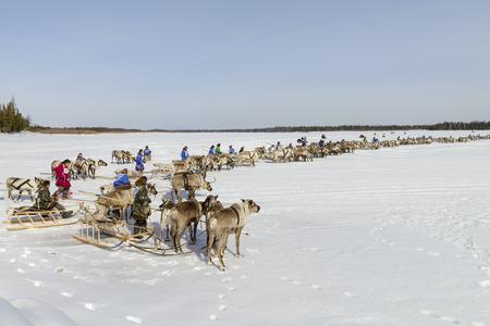 races on reindeer sled in the Reindeer Herders Day on Yamal