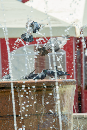Birds are sitting on the fountain