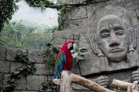 Parrot sitting on a branch Foto de archivo