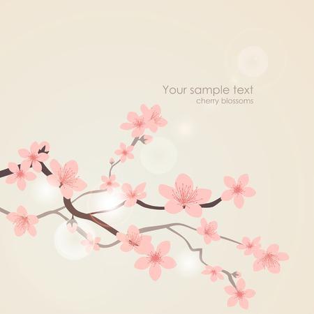 cerezos en flor: flores de cerezo del vector. Naturaleza floral fondo de color rosa