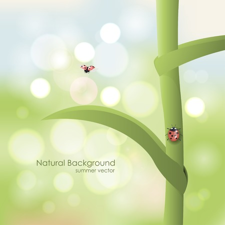 Natural vector background. Ladybird on a stalk on a sunny day