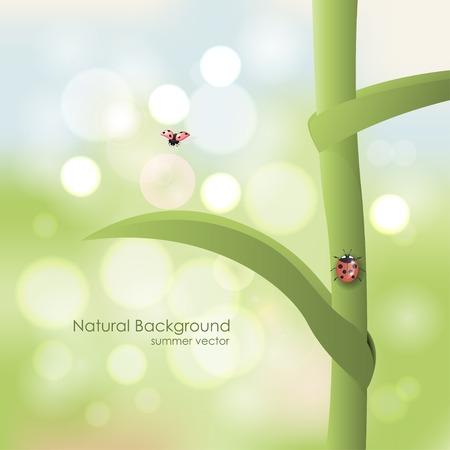 ladybird: Natural vector background. Ladybird on a stalk on a sunny day