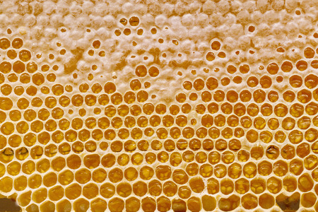 honey in sealed cells