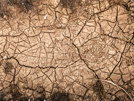 cracked clay ground into the dry season 版權商用圖片