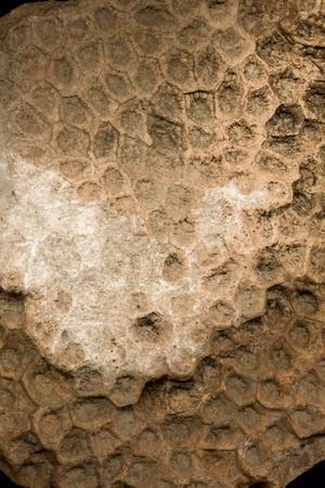 old petrified honeycomb close-up shot
