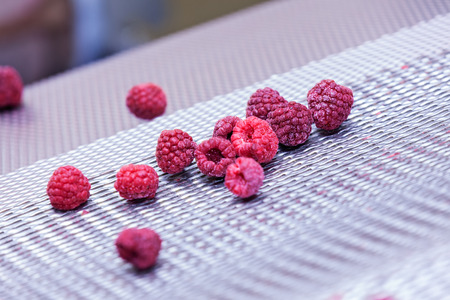 sorting: frozen red raspberries in sorting and processing machines