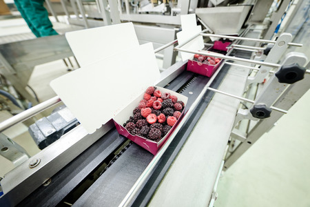 frozen red raspberries in sorting and processing machines photo