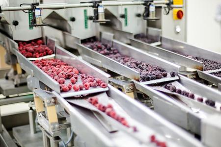 냉동과 빨강 나무 딸기 정렬 및 가공 기계
