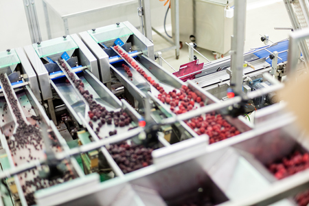 frozen red raspberries in sorting and processing machines