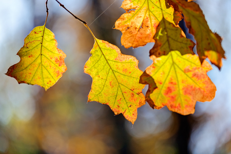 orange fallen leaves in the park