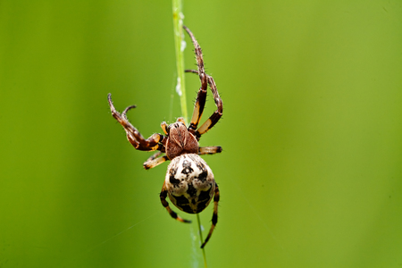 Macro of a spider sitting on stalk of grass; note shallow depth of field