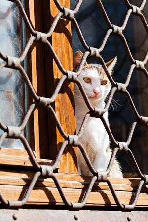 gratings: Cat sitting behind iron fence waiting Stock Photo