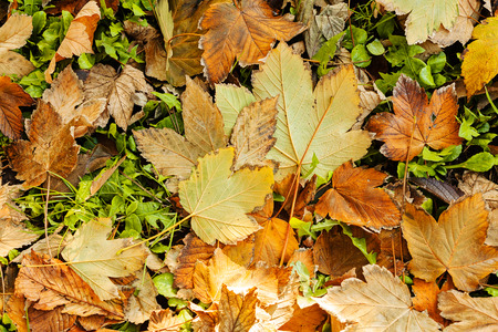 heap: withered fallen leaves on the grass, note shallow depth of field