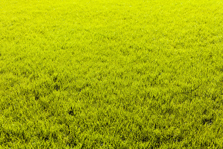 Green blades of grass after rain, on natural background; note shallow depth of field