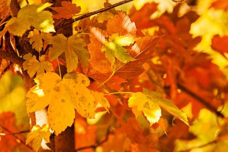 빨강 및 녹색 잎 나무, 필드의 얕은 깊이 참고