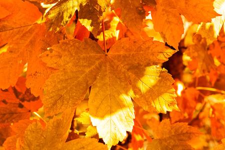 bladeren in alle kleuren van de herfst, let op ondiepe scherptediepte