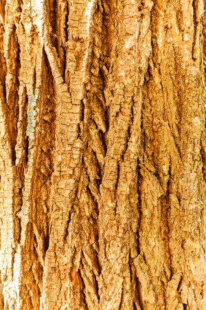 tree bark in nature, note shallow depth of field