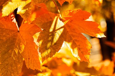 Blätter in allen Farben des Herbstes, geringe Schärfentiefe Standard-Bild - 86862188