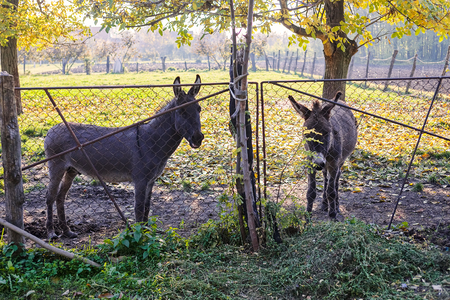 donkey behind the fence in the yard, note shallow depth of field Imagens