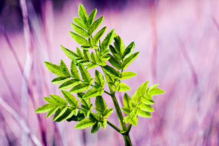 Green leaf on a purple background, note shallow depth of field