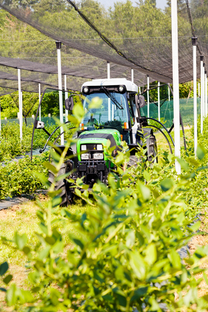 backstop: blueberry plantations with backstops and mechanization, note shallow depth of field