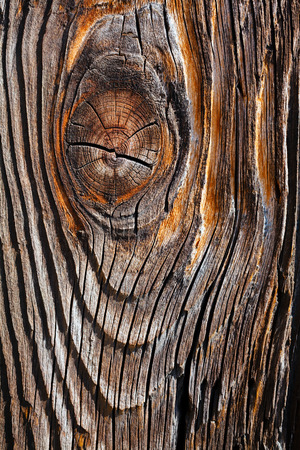 Closeup view of old tree trunk for background texture Imagens
