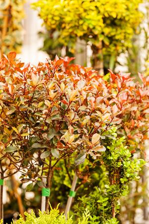 빨강 및 녹색 식물, 필드의 얕은 깊이 참고에 나뭇잎