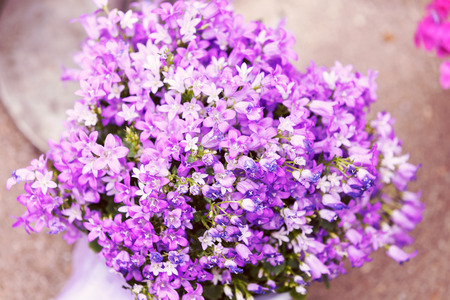 a bouquet of purple flowers, note shallow depth of field Imagens