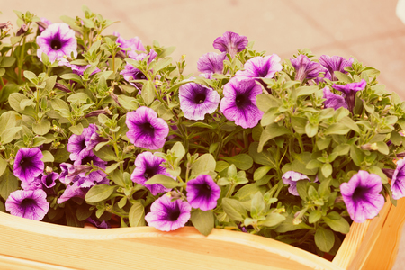 purple flowers  with green leaves, note shallow depth of field Imagens