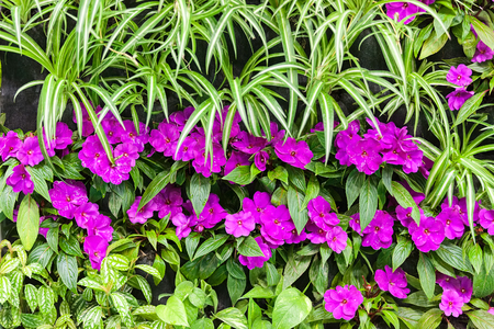 purple flowers with green leaves, note shallow depth of field