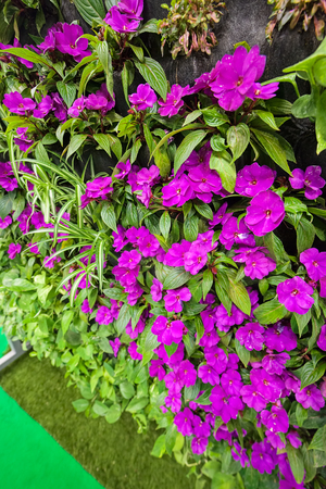 purple flowers with green leaves, note shallow depth of field Imagens - 86608380
