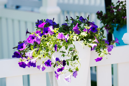 purple flowers as decoration fence, note shallow depth of field Imagens