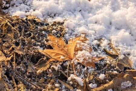 Dry leaves in the middle of winter Reklamní fotografie