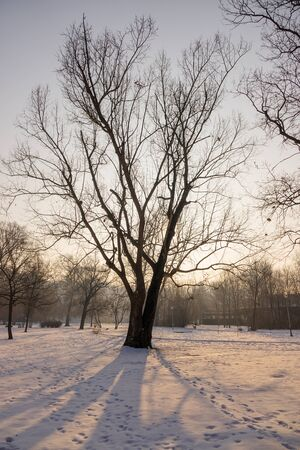 trees under the snow in the park, note shallow depth of field Reklamní fotografie