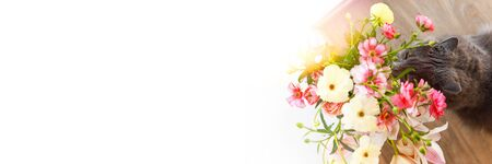 Background for banner ad. Cat sniffing a bouquet of fresh spring flowers with ranunculus at home. 版權商用圖片