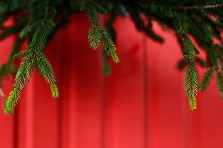 Fresh green spring spruce branches hang on a bright red fence. Christmas background. 版權商用圖片