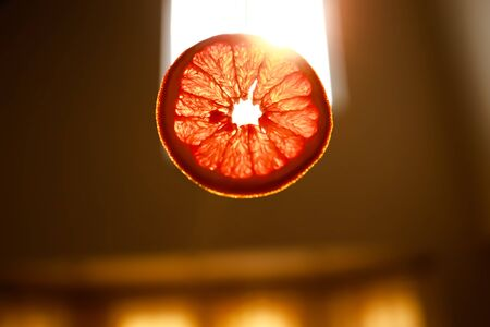 A piece of dried grapefruit in intence sunlight. Beautiful backlight and sunray.