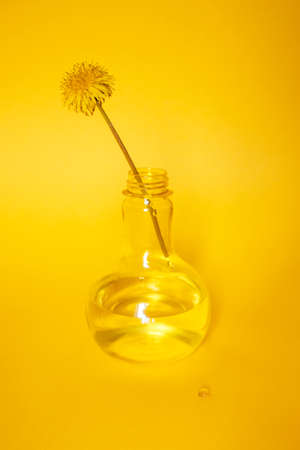 Minimalism still life composition with dandelion in glass vase. Yellow gradient background