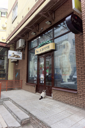 he laughs: Nizhny Novgorod, Russia. - June 20.2016. Domestic cat in the collar came to the pet store to Larry for a meal. He came and sat in front of the door and meows