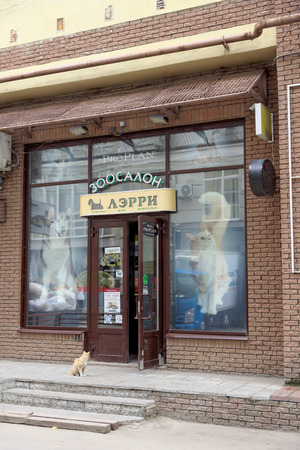 Nizhny Novgorod, Russia. - June 20.2016. Domestic cat in the collar came to the pet store to Larry for a meal. He came and sat in front of the door and meows