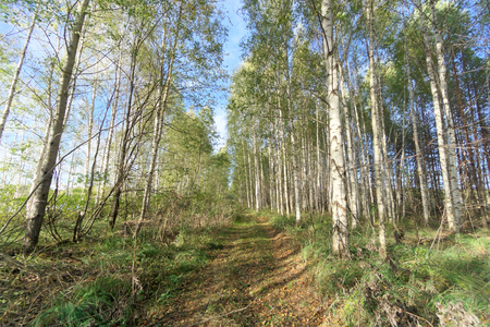 Forest road in early autumn. Trees wall stand to the left and right of the road. Stock fotó