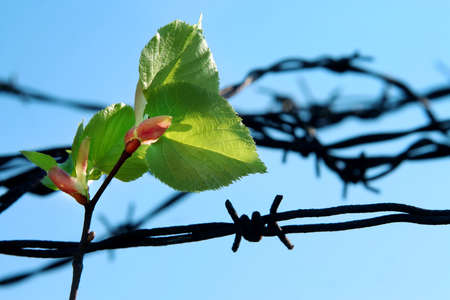 leaf and old barbed wire photo
